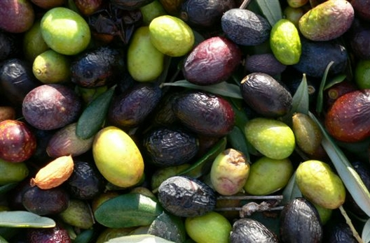 Découvrez l'huile d'olive extra vierge Toscane à l'Hôtel Villa Le Barone dans le Chianti