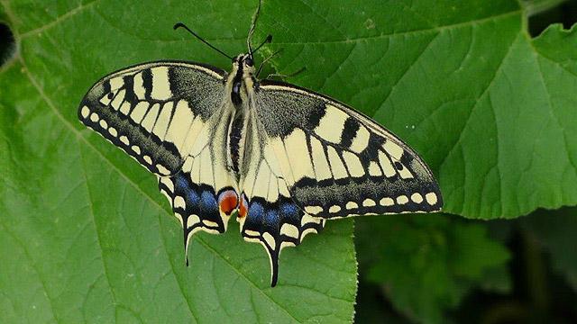Papillon à Villa le Barone en Toscane