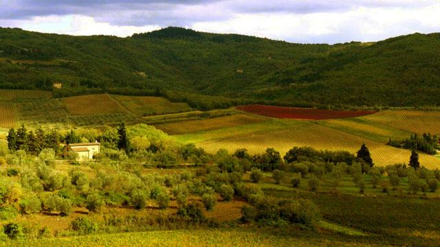 """Paysage du Chianti avec le cépage  """"canaiolo"""" vu de  Villa le Barone"""