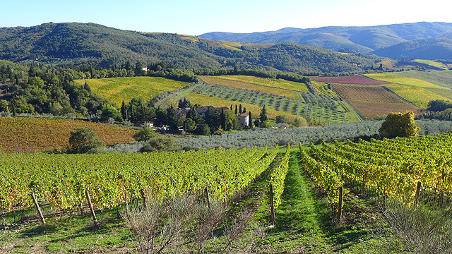 Chianti Classico Vineyards from Villa le Barone Panzano in Chianti