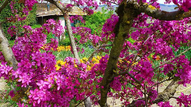 Un angle de Villa le Barone au printemps